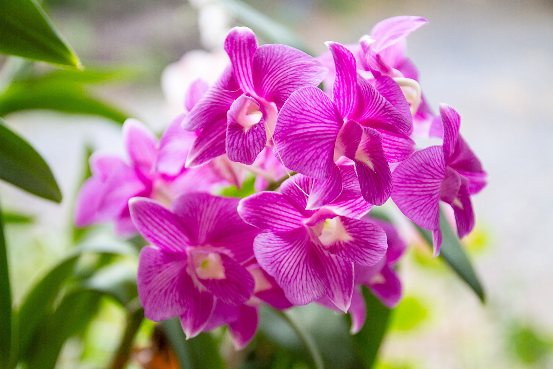 orchid-1594602_1920