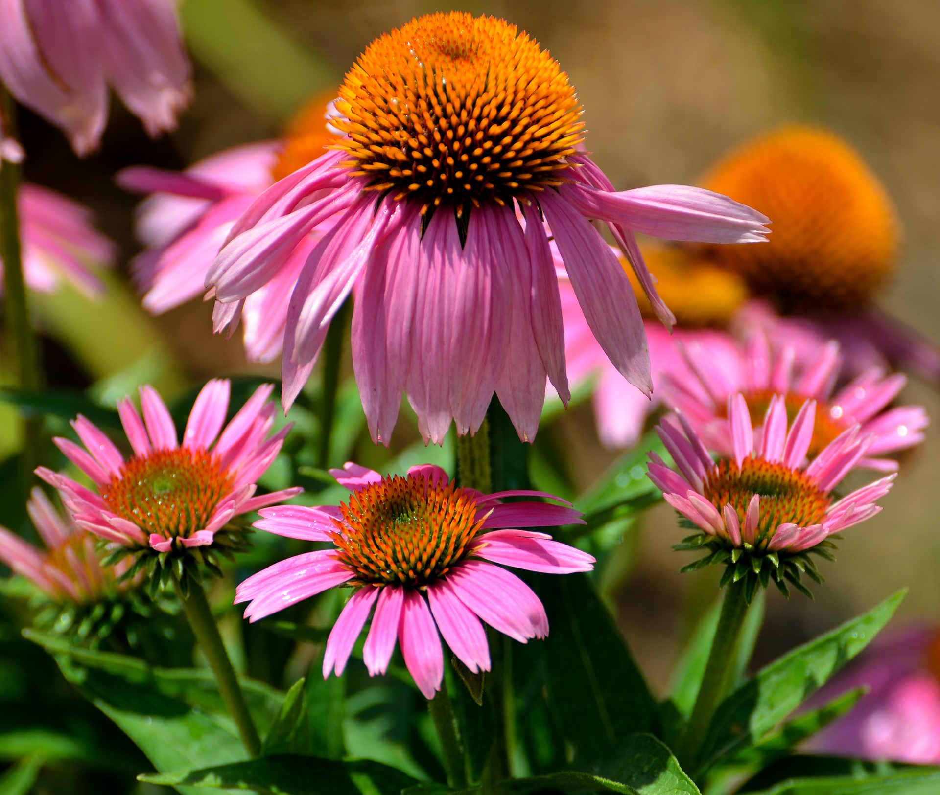 Why Fall Is The Best Time To Plant Perennials Espoma