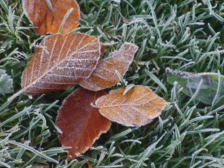 Winter can be hard on any garden, but many plants can be protected from a light frost and continue to grow until your first hard freeze.